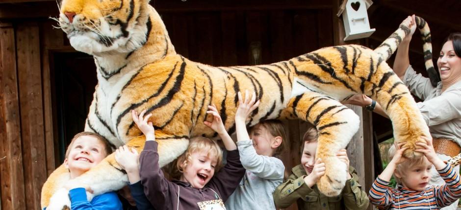 Blog Tiger alle