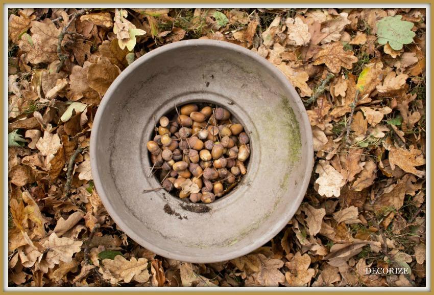 Herbstfarben6_lowres
