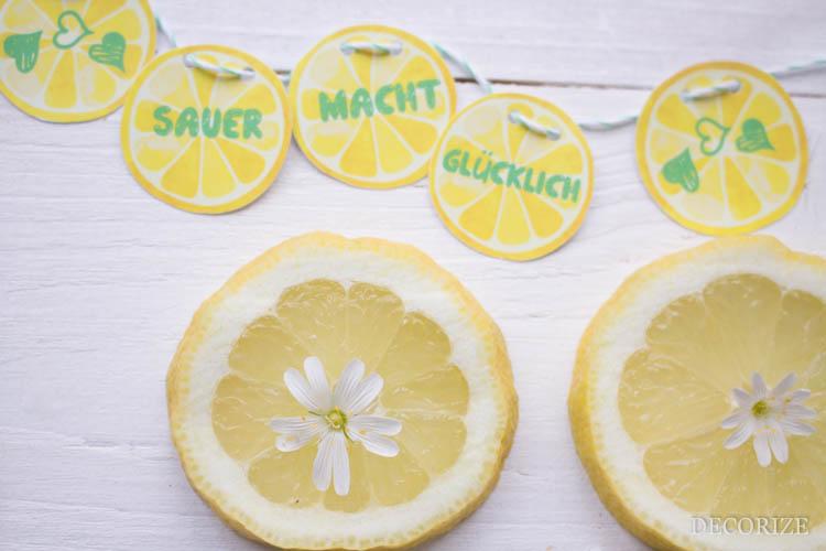 Zitronen Tarte (6 von 13)